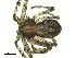 (Philodromus vulgaris - 01ARONT-G02)  @14 [ ] CreativeCommons - Attribution Non-Commercial Share-Alike (2009) Gergin Blagoev, Biodiversity Intitute of Ontario Biodiversity Institute of Ontario