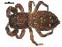 (Phidippus purpuratus - 09ONTGAB-134)  @14 [ ] CreativeCommons - Attribution Share-Alike (2009) Gergin Blagoev, Biodiversity Institute of Ontario Unspecified