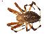 (Araneus nordmanni - BIOUG00614-A03)  @14 [ ] Copyright  G. Blagoev 2010 Unspecified