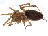 (Agelenopsis utahana - BIOUG00614-C08)  @14 [ ] Copyright  G. Blagoev 2010 Unspecified
