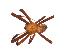 (Gea - BIOUG09848-E12)  @14 [ ] CreativeCommons – Attribution Non-Commercial Share-Alike (2014) G. Blagoev Biodiversity Institute of Ontario