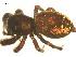 (Phidippus borealis - BIOUG12603-A01)  @13 [ ] CreativeCommons – Attribution Non-Commercial Share-Alike (2014) G. Blagoev Biodiversity Institute of Ontario