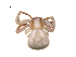 (Misumenoides - BIOUG12606-G09)  @14 [ ] CreativeCommons – Attribution Non-Commercial Share-Alike (2014) G. Blagoev Biodiversity Institute of Ontario