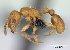 (Tetramorium delagoense - CASENT0147200-D01)  @13 [ ] Unspecified (default): All Rights Reserved  Unspecified Unspecified