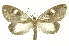 (Notodontidae - INB0003521263)  @18 [ ] Copyright (2012) Juan Mata Lorenzen Unspecified
