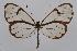 (Greta anette championi - INB0003705750)  @14 [ ] CreativeCommons - Attribution Non-Commercial Share-Alike (2012) National Biodiversity Institute of Costa Rica National Biodiversity Institute of Costa Rica