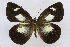 (Leptophobia caesia tenuicornis - INB0003848836)  @15 [ ] CreativeCommons - Attribution Non-Commercial Share-Alike (2012) National Biodiversity Institute of Costa Rica National Biodiversity Institute of Costa Rica