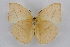 (Rhabdodryas - INB0004179069)  @15 [ ] CreativeCommons - Attribution Non-Commercial Share-Alike (2012) National Biodiversity Institute of Costa Rica National Biodiversity Institute of Costa Rica
