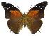 (Historis - INB0004270486)  @15 [ ] Copyright (2011) J. Montero Instituto Nacional de Biodiversidad