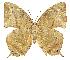 (Memphis - INB0004270990)  @16 [ ] Copyright (2011) J. Montero Instituto Nacional de Biodiversidad