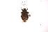 (Lojus - INB0003715004)  @12 [ ] Copyright (2012) Jim Lewis Instituto Nacional de Biodiversidad