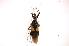 (Apiomerinae - INB0004213310)  @14 [ ] Copyright (2012) J. Lewis Instituto Nacional de Biodiversidad