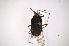 (Moncus - INBIOCRI001394046)  @11 [ ] Copyright (2012) Jim Lewis Instituto Nacional de Biodiversidad