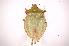 (Chlorocoris - INBIOCRI001824286)  @14 [ ] Copyright (2012) Jim Lewis Instituto Nacional de Biodiversidad