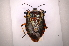 (Ramosiana - INBIOCRI002133484)  @15 [ ] Copyright (2012) Jim Lewis Instituto Nacional de Biodiversidad