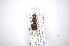 (Hermetia coarctata - INB0003085655)  @12 [ ] Copyright (2012) M. Zumbado Instituto Nacional de Biodiversidad