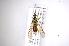 (Hermetia flavipes - INB0003308957)  @14 [ ] Copyright (2012) M. Zumbado Instituto Nacional de Biodiversidad