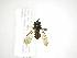 (Argentinomyia - INB0003311458)  @14 [ ] Copyright (2012) M. Zumbado Instituto Nacional de Biodiversidad