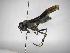 (Polistes bicolor - INB0003333205)  @13 [ ] Copyright (2012) Braulio Hernandez Instituto Nacional de Biodiversidad