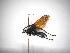 (Pepsis basifusca - INBIOCRI001633521)  @11 [ ] Copyright (2012) Braulio Hernandez Instituto Nacional de Biodiversidad