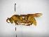 (Polistes carnifex carnifex - INBIOCRI002215807)  @14 [ ] Copyright (2012) Braulio Hernandez Instituto Nacional de Biodiversidad