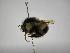 (Bombus digressus - INBIOCRI002249903)  @11 [ ] Copyright (2012) Braulio Hernandez Instituto Nacional de Biodiversidad