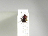 (Canthon silvaticus - INB0003051127)  @11 [ ] Copyright (2010) A. Solis Instituto Nacional de Biodiversidad