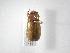 (Phyllophaga aequata - INB0003127283)  @11 [ ] Copyright (2010) A. Solis Instituto Nacional de Biodiversidad