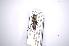 (Disteniidae - INBIOCRI000941781)  @15 [ ] Copyright (2012) A. Solis Instituto Nacional de Biodiversidad