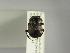 (Canthon septemmaculatum - INBIOCRI001952592)  @13 [ ] Copyright (2010) A. Solis Instituto Nacional de Biodiversidad