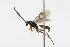 (Ichneumonidae sp. MAS BIN87 - 06-PROBE-4094)  @14 [ ] CreativeCommons - Attribution Non-Commercial Share-Alike (2010) Unspecified Biodiversity Institute of Ontario