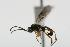 (Ichneumonidae sp. MAS BIN238 - 06-PROBE-4211)  @11 [ ] CreativeCommons - Attribution Non-Commercial Share-Alike (2010) Unspecified Biodiversity Institute of Ontario