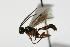 (Ichneumonidae sp. MAS BIN114 - 06-PROBE-4219)  @11 [ ] CreativeCommons - Attribution Non-Commercial Share-Alike (2010) Unspecified Biodiversity Institute of Ontario