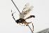 (Ichneumonidae sp. MAS BIN247 - 06-PROBE-4239)  @12 [ ] CreativeCommons - Attribution Non-Commercial Share-Alike (2010) Unspecified Biodiversity Institute of Ontario