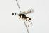 (Ichneumonidae sp. MAS BIN274 - 06-PROBE-4243)  @12 [ ] CreativeCommons - Attribution Non-Commercial Share-Alike (2010) Unspecified Biodiversity Institute of Ontario