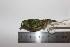 (Lepidothrix - MHNSM MUSM-Orn-15700)  @11 [ ] Copyright (2014) Unspecified Museo de Historia Natural