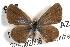  (Hemiargus - JLB-0212)  @14 [ ] CreativeCommons - Attribution Non-Commercial Share-Alike (2009) Unspecified Biodiversity Institute of Ontario
