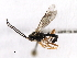 (Ichneumonidae sp. MAS BIN373 - 07PROBE-20585)  @11 [ ] CreativeCommons - Attribution Non-Commercial Share-Alike (2009) Unspecified Biodiversity Institute of Ontario