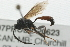(Ichneumonidae sp. MAS BIN335 - 07PROBE-20623)  @11 [ ] CreativeCommons - Attribution Non-Commercial Share-Alike (2009) Unspecified Biodiversity Institute of Ontario