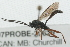 (Ichneumonidae sp. MAS BIN337 - 07PROBE-20629)  @12 [ ] CreativeCommons - Attribution Non-Commercial Share-Alike (2009) Unspecified Biodiversity Institute of Ontario