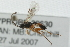 (Ichneumonidae sp. MAS BIN2 - 07PROBE-20630)  @11 [ ] CreativeCommons - Attribution Non-Commercial Share-Alike (2009) Unspecified Biodiversity Institute of Ontario