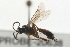 (Ichneumonidae sp. MAS BIN231 - 07PROBE-20638)  @11 [ ] CreativeCommons - Attribution Non-Commercial Share-Alike (2009) Unspecified Biodiversity Institute of Ontario