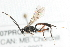 (Ichneumonidae sp. MAS BIN332 - 07PROBE-20641)  @12 [ ] CreativeCommons - Attribution Non-Commercial Share-Alike (2009) Unspecified Biodiversity Institute of Ontario