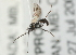 (Ichneumonidae sp. MAS BIN458 - 07PROBE-20683)  @11 [ ] CreativeCommons - Attribution Non-Commercial Share-Alike (2009) Unspecified Biodiversity Institute of Ontario