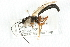 (Ichneumonidae sp. MAS BIN449 - 07PROBE-20697)  @12 [ ] CreativeCommons - Attribution Non-Commercial Share-Alike (2009) Unspecified Biodiversity Institute of Ontario