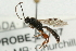 (Ichneumonidae sp. MAS BIN437 - 07PROBE-20737)  @11 [ ] CreativeCommons - Attribution Non-Commercial Share-Alike (2009) Unspecified Biodiversity Institute of Ontario