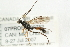 (Ichneumonidae sp. MAS BIN282 - 07PROBE-20752)  @11 [ ] CreativeCommons - Attribution Non-Commercial Share-Alike (2009) Unspecified Biodiversity Institute of Ontario