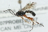 (Ichneumonidae sp. MAS BIN483 - 07PROBE-20767)  @11 [ ] CreativeCommons - Attribution Non-Commercial Share-Alike (2009) Unspecified Biodiversity Institute of Ontario