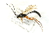 (Ichneumonidae sp. MAS BIN480 - 07PROBE-20774)  @13 [ ] CreativeCommons - Attribution Non-Commercial Share-Alike (2009) Unspecified Biodiversity Institute of Ontario