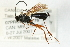 (Ichneumonidae sp. MAS BIN288 - 07PROBE-20776)  @11 [ ] CreativeCommons - Attribution Non-Commercial Share-Alike (2009) Unspecified Biodiversity Institute of Ontario